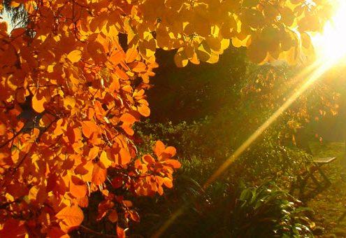 Ajurveda: kako ohraniti ravnovesje jeseni
