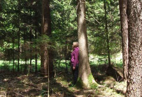 Vaja za hrbtenico in sprostitev stresa v gozdu