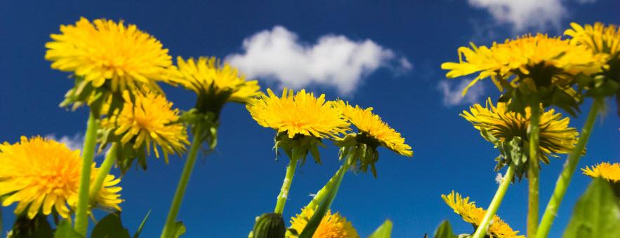 Ajurveda: kaj je najbolj pomembno pomladi, zdravje in čiščenje telesa